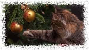 EN Дед Мороз